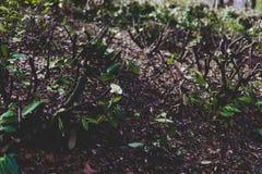 Вырезывания дерева в земле при новые листья приходя вне Стоковая Фотография RF