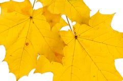 вырезы com собраний предпосылки colldet6119 осени изолированный http href dreamstime выходит больше моих предметов угождают белиз Стоковое Фото