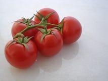 выровнянная налево созретая лоза томатов Стоковое Изображение
