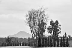 Выровнянные деревья стоковое фото rf