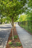 выровнянный вал тротуара Стоковое Изображение