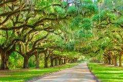 Выровнянный деревом вход плантации Стоковое Изображение RF