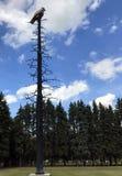 Высекаенный орел на нациях длинной равнины первых, Манитоба металла Стоковое Изображение