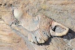 Высекаенный от деревянного волка завывать Стоковые Изображения RF