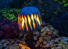Высекаенный фонарик тыквы Накаляя нашивки света в темноте, fe Стоковое фото RF