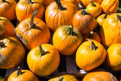 высеканная тыква halloween Стоковые Изображения RF