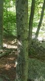 Высекать дерева Стоковые Фото