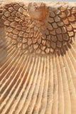 высекающ близкие hierapolis phoenix вверх стоковое изображение rf