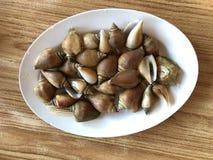 Выследите раковину или съестную улитку моря на таблице Стоковые Изображения RF