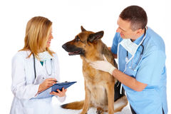 выследите рассматривать 2 ветеринара Стоковые Изображения RF