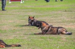Выследите сидение на корточках в быть натренированной безопасностью солдатом на траве Стоковое Фото