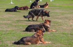 Выследите сидение на корточках в быть натренированной безопасностью солдатом на траве Стоковое Изображение RF