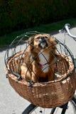 Выследите сидеть в корзине велосипеда защищенной сетью провода стоковое фото rf