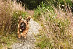 Выследите ход любимчика пока усмехающся в травянистом ландшафте стоковые изображения rf