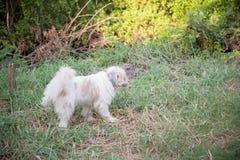 Выследите peeing на траве в парке Стоковые Фото