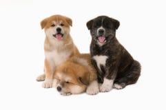 выслеживает puppie Стоковые Изображения