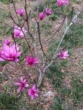 высокая белизна тюльпана вала разрешения иллюстрации 3d Стоковое Изображение