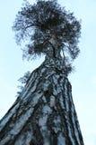 Высокая вегетация подъема Стоковое Фото