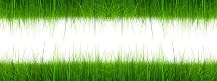 Высокая изолированная трава разрешения Стоковые Фотографии RF