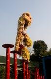 высокая куча льва Стоковая Фотография