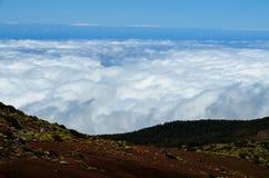 Высокая облачность над лесом деревьев конуса сосны Стоковые Фото
