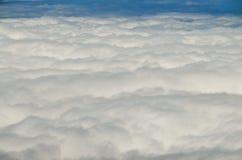 Высокая облачность над лесом деревьев конуса сосны Стоковое Изображение RF