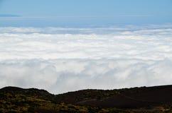 Высокая облачность над лесом деревьев конуса сосны Стоковые Изображения RF