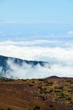 Высокая облачность над лесом деревьев конуса сосны Стоковые Фотографии RF