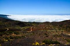 Высокая облачность над лесом деревьев конуса сосны Стоковое Фото