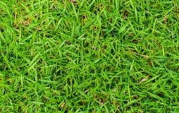 Высокая предпосылка фото зеленой травы зеленый цвет травы поля предпосылки Стоковые Изображения RF