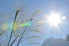 трава и яркие солнце и гора Стоковые Изображения