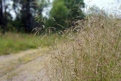 Высокая трава на стороне грязной улицы, в лесе Стоковая Фотография RF