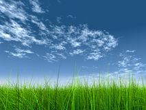 Высокая трава разрешения над небом Стоковое Фото