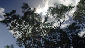 Высокие деревья под солнцем сток-видео