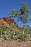 Высокие деревья в сухом русле реки с захолустьем австралийца выхода скалы на поверхность Стоковое Изображение RF