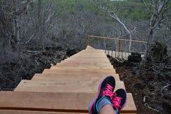 Высокие деревянные лестницы стоковые фото