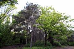 Высокие зеленые деревья в a стоковые изображения rf