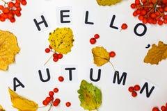 Высокие листья желтого цвета осени Стоковые Изображения RF