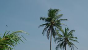 Высокие пальмы трясут в ветре против голубого неба с облаками в Индии на летний день 4K акции видеоматериалы