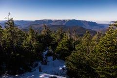 Высокий взгляд пешего пути в лесе горы Richardson внутри Стоковое Изображение RF