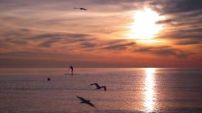 высокий заход солнца моря разрешения jpg Sillhouette человека на доске прибоя на заходе солнца Птицы летая над морем сток-видео