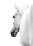 высокий ключ лошади стоковое фото rf