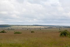 Высокий ландшафт Botrange Бельгия фенов Стоковые Изображения RF