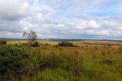 Высокий ландшафт Botrange Бельгия фенов Стоковое фото RF