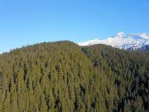 Высокий над деревьями в Аляске стоковое фото rf