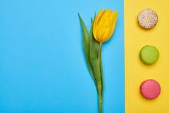 Высокий угол одиночного желтого тюльпана с линией macaroons Стоковое фото RF