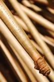 Высоки наклоненный корень вала Screwpine Стоковое Изображение