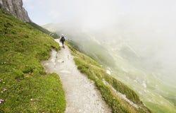 высокогорная долина Румынии стоковая фотография