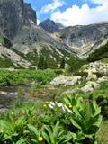 Высокогорная долина Стоковое фото RF