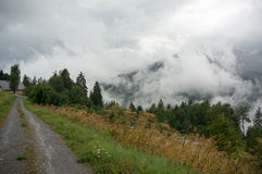 Высокогорная природа леса Стоковая Фотография RF